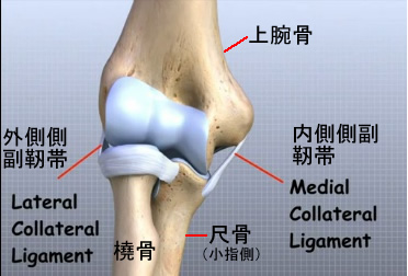 elbow collateral ligament.jpg